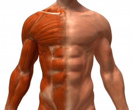 Dica rápida para perder gordura corporal